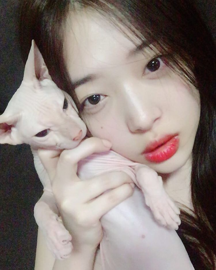 Image result for sulli cat