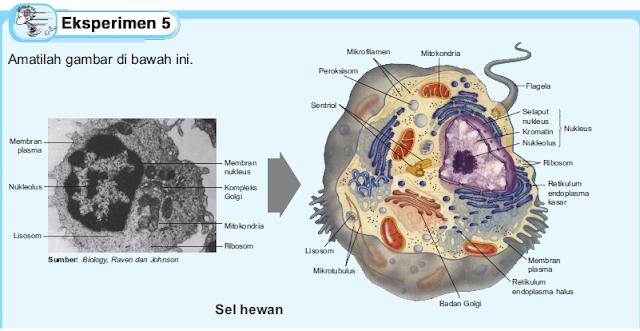 Gambar 1: Gambar Sel hewan beserta bagian-bagiannya