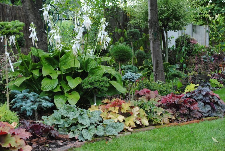 Kata y plantas parlantes for Plantas decorativas hojas