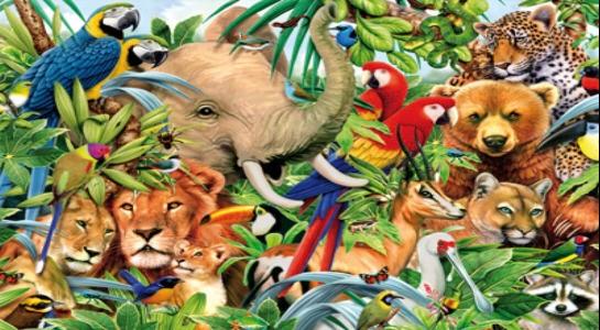 Importancia de la Biodiversidad