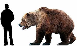 Tamaño oso cavernario comparado con humanos
