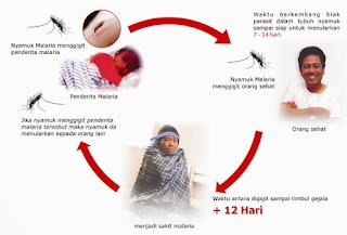 https://mustahabbah.blogspot.com/2017/08/diagnosis-penyakit-malaria-serta.html