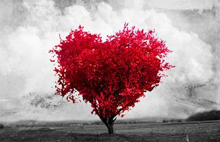 Algumas coisas sobre o amor