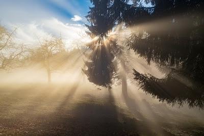 Fog through tree feels like brain fog