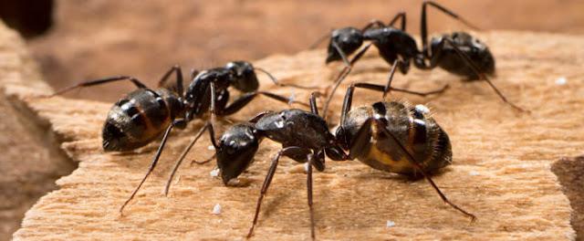 مَن الذي هدى النملة وعلًّمها؟