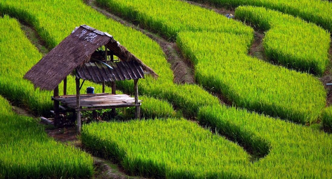 16 Contoh Karya Tulis Pertanian Skripsi Tesis Lomba Kti Dan