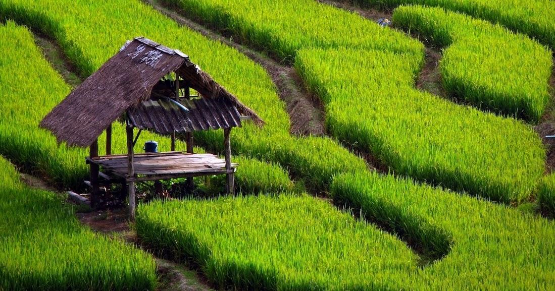 16 Contoh Karya Tulis Pertanian Skripsi Tesis Lomba Kti Dan Essay Terlengkap Seputarpembahasan Com