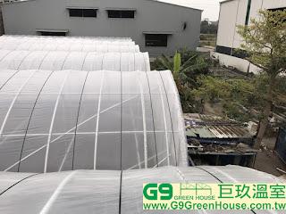 (17).簡易加強型溫室風頭結構屋頂農膜覆蓋完成外觀