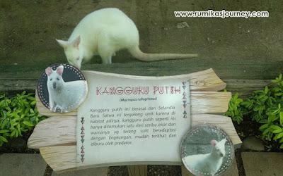 hewan unik di faunaland ancol jakarta