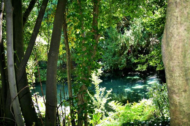 alberi, acqua, piante