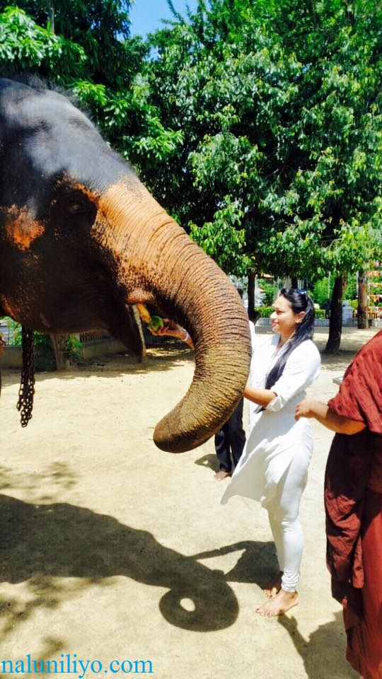 Janaki Wijerathne birthday feeding elephants Uduwe Dhammaloka Thero temple