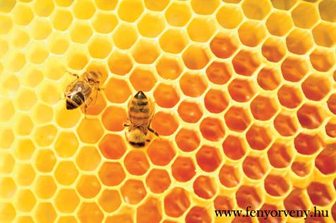 Európai Unió az akácfák és a méhek ellen