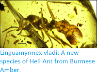 http://sciencythoughts.blogspot.co.uk/2017/09/linguamyrmex-vladi-new-species-of-hell.html