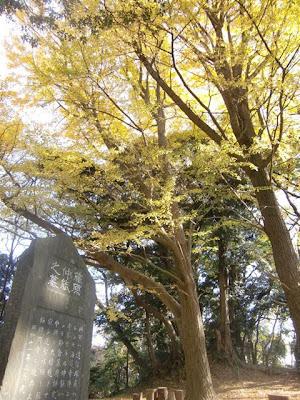 葛原岡神社のイチョウ