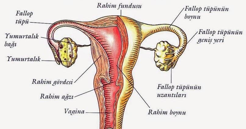 Vajinanın Güzel Kokması İçin Ne Yapılmalı Vajina Koku Giderici Doğal Yollar