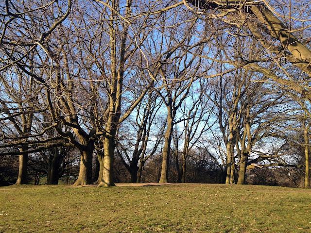 Me encatan estos árboles de Hampstead park