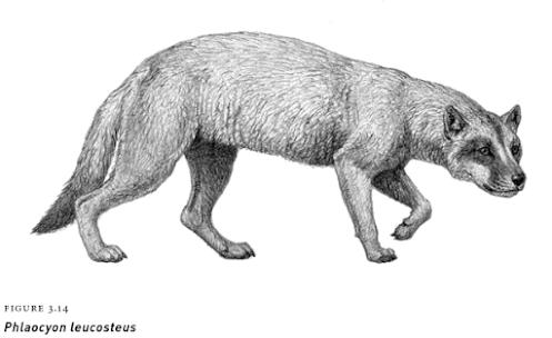 oligocene mammals