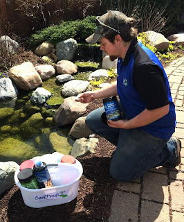 treatments for clear water for backyard ponds