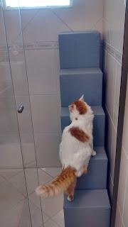 acesso janela para gatos