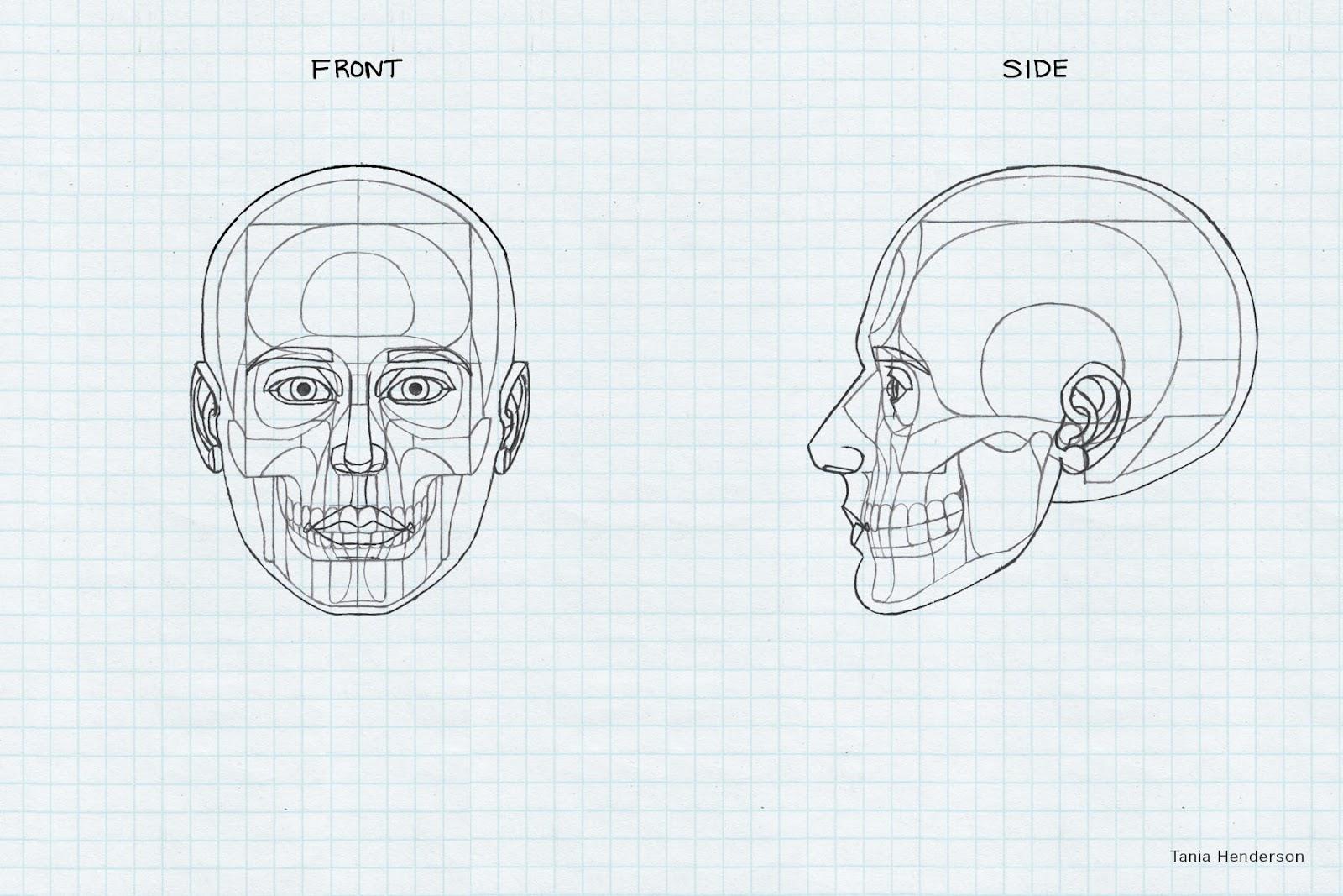 Tania Henderson Anatomy Diagrams