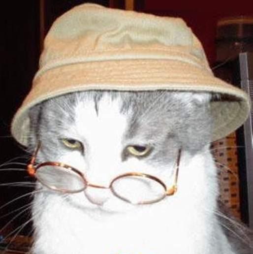 gato-anciano-alimentación-apropiada