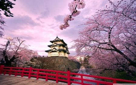 During March and April is Cherry Blossom Season in Japan
