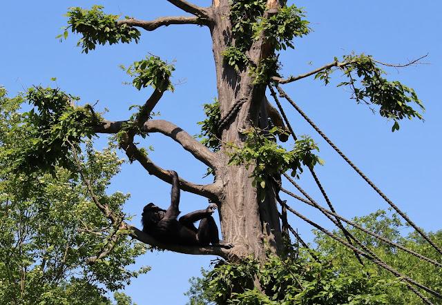 Affen im Zoo Leipzig