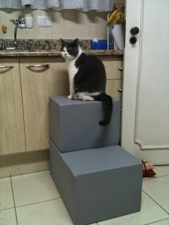 gatos e mobilidade