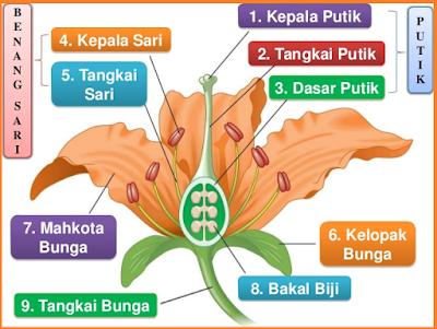 gambar Bagian Bagian Bunga Dan Fungsinya