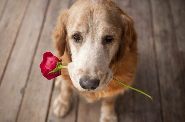 Perros con flores en la boca