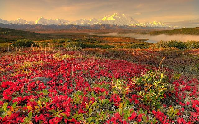 Fonds d'écrans printemps fleurs