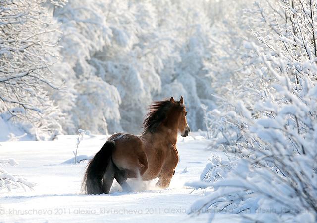 Winter Animal Wallpaper صور خيول 2018 اجمل الخيول في العالم Pictures Of