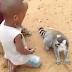 Ο… απαιτητικός λεμούριος που τρελαίνει το YouTube (Video)