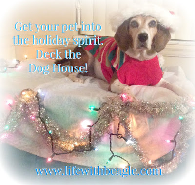 Decorate your pet's living space for Christmas.