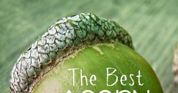 The Best Acorn Crafts And Activities For Kids Still