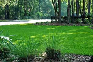 Fertilize grass and turf with organic worm castings