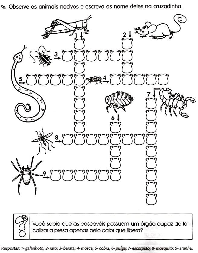 animais Úteis e animais nocivos atividades e desenhos colorir