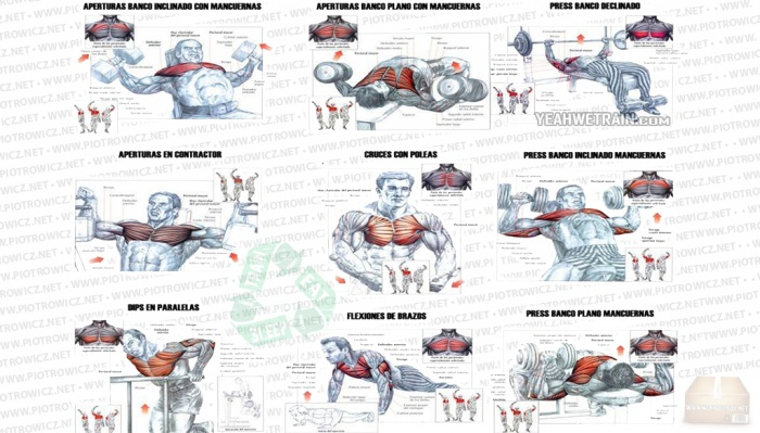 Short, Effective and Efficient Upper Body Workout
