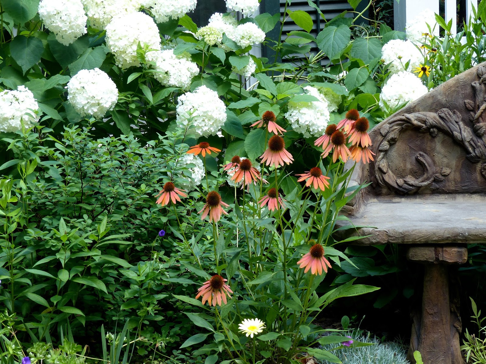 Garden Photo Of The Day 2017