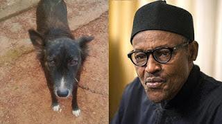 , Reasons Why I named My Dog, Buhari – 30 year old Trader Explains, Latest Nigeria News, Daily Devotionals & Celebrity Gossips - Chidispalace