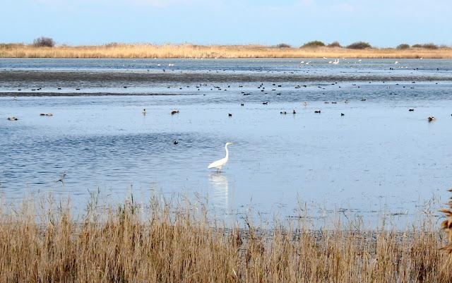 Aves en la laguna del Garxal