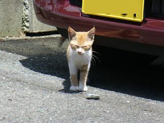 3匹の茶トラ子猫 出逢い