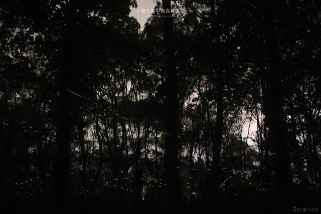大農大富平地森林園區-9
