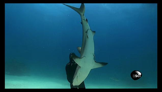 Shark Balancing