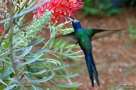 Flores ricas em néctar