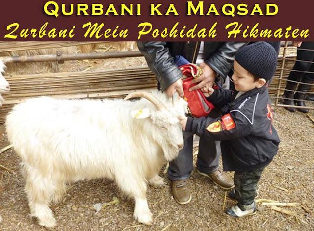 Qurbani Ka Janwar Qur'an and Sunnah Our ...