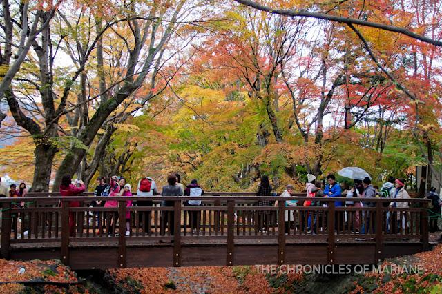 autumn leaves festival kawaguchiko