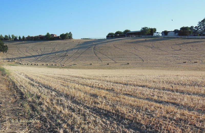Hay Field on Hwy 46 West, Paso Robles © B. Radisavljevic