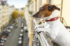 cães em edificios