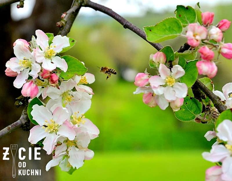 jablon, kwiaty jabloni, pszczola, szaszlyki, danie z grilla, przepis na szaszalyki, ketchup, ketchup kielecki, musztarda, musztardz kielecka, jak zrobic szaszlyki, majowka, przyjecie w ogrodzie, zycie od kuchni